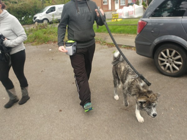 Training and Socialisation Group Walks